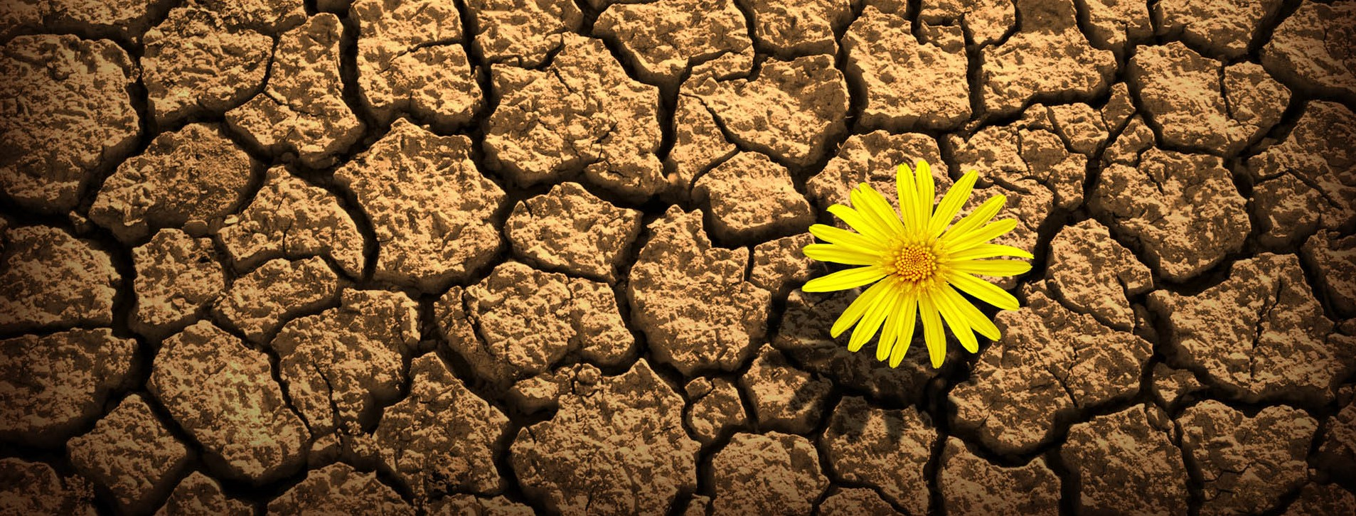 Resilienza: cos'é e perché costituisce una risorsa fondamentale?